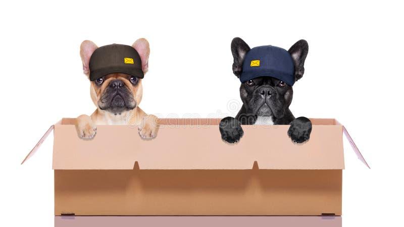 Κινούμενο ζεύγος κιβωτίων των σκυλιών στοκ φωτογραφίες