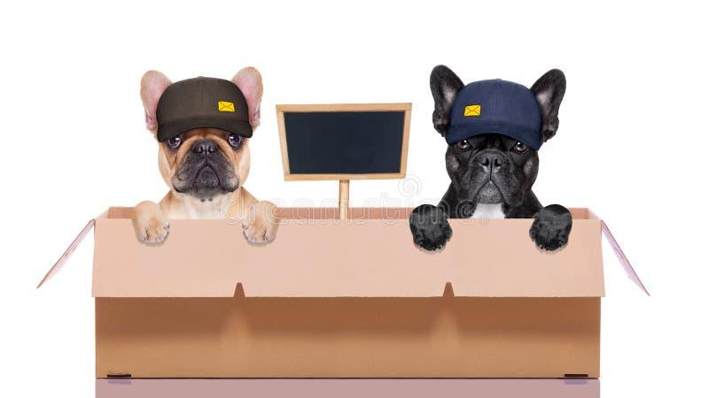 Κινούμενο ζεύγος κιβωτίων των σκυλιών στοκ εικόνα με δικαίωμα ελεύθερης χρήσης