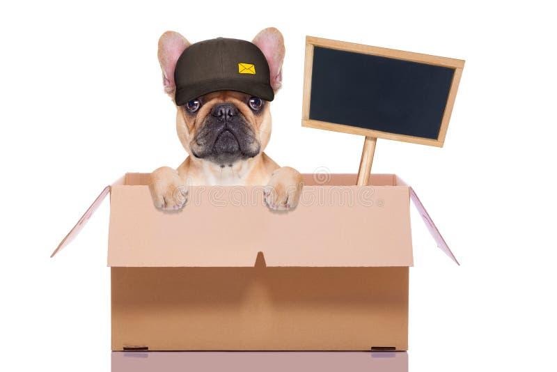 Κινούμενο σκυλί κιβωτίων στοκ φωτογραφία με δικαίωμα ελεύθερης χρήσης