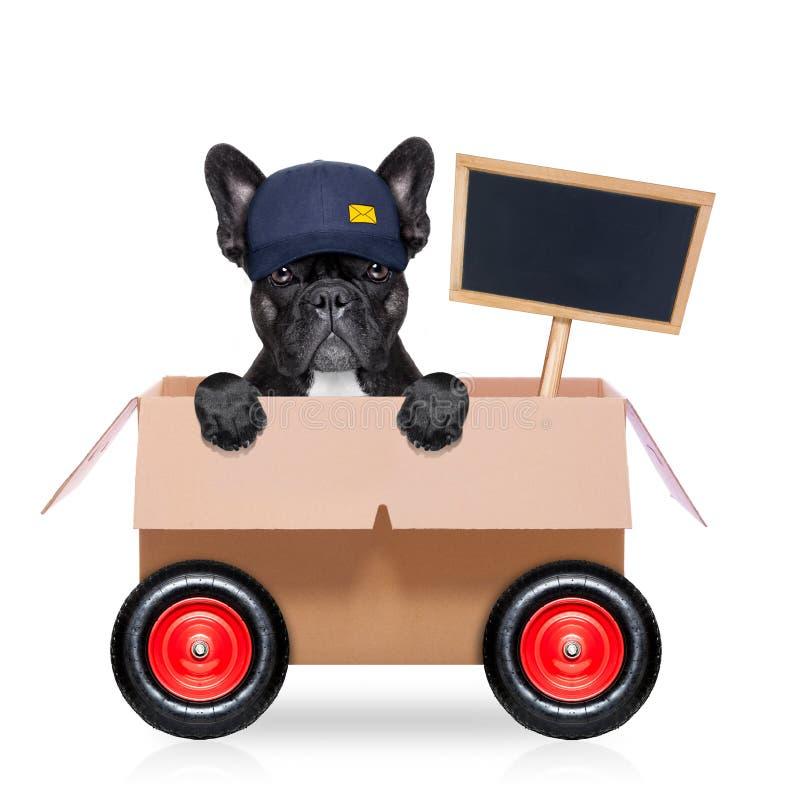 Κινούμενο σκυλί κιβωτίων στοκ φωτογραφίες με δικαίωμα ελεύθερης χρήσης
