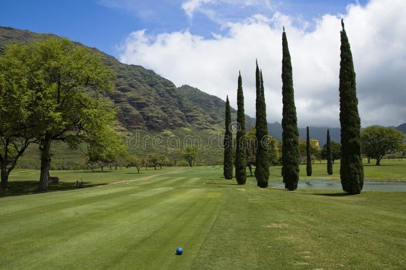 Κιονοειδές Evergreens στο γήπεδο του γκολφ κοιλάδων Makaha, Oahu στοκ φωτογραφία