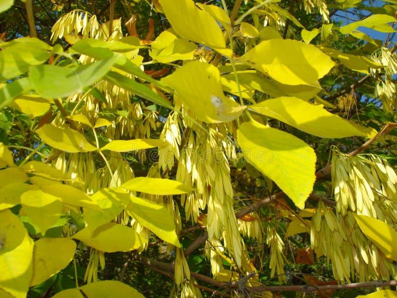 Κιτρινίζοντας φύλλα στοκ εικόνα