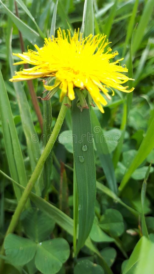 κιτρινοπράσινες εγκαταστάσεις λουλουδιών στοκ φωτογραφίες