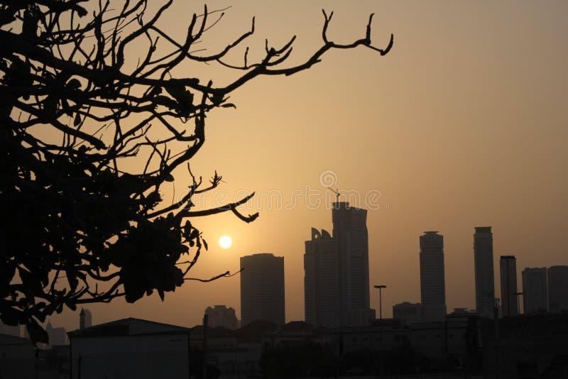Κλάδοι δέντρων σκιαγραφιών και ορίζοντας πόλεων που χτίζει το ηλιοβασίλεμα ανατολής πρωινού του s στοκ εικόνες με δικαίωμα ελεύθερης χρήσης
