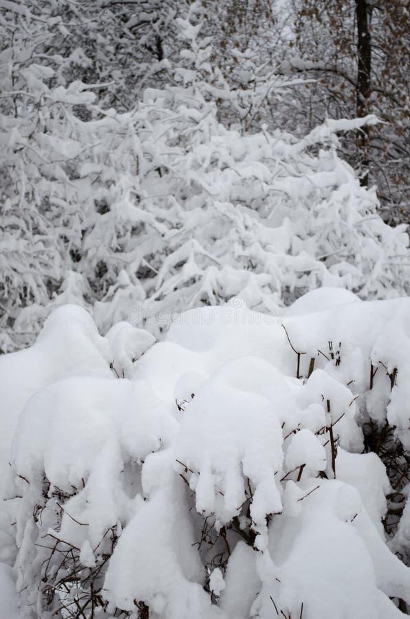 Κλάδοι κάτω από τη ισχυρή χιονόπτωση στοκ φωτογραφίες με δικαίωμα ελεύθερης χρήσης