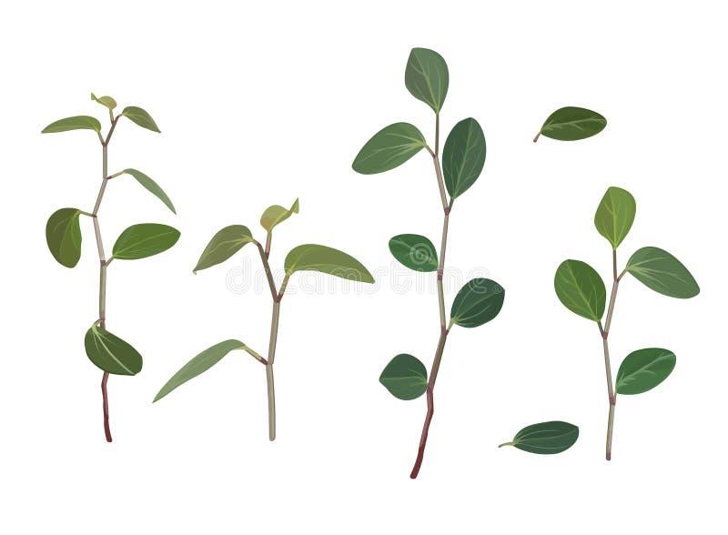 Κλάδοι και φύλλα των λουλουδιών του tradiscation που απομονώνεται στο άσπρο υπόβαθρο διανυσματική απεικόνιση