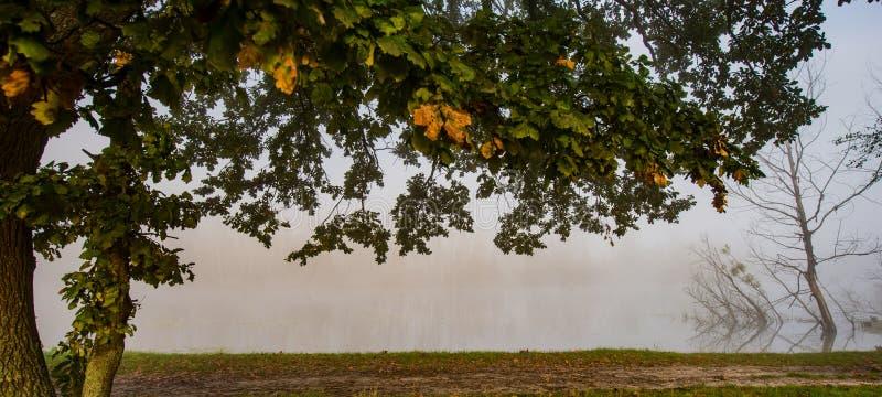 Κλάδοι και φύλλωμα φθινοπώρου μιας βαλανιδιάς στις όχθεις του ποταμού ο στοκ εικόνες