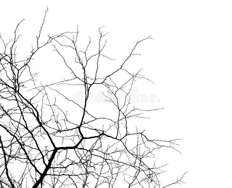 κλάδοι πέρα από το λευκό στοκ φωτογραφία με δικαίωμα ελεύθερης χρήσης