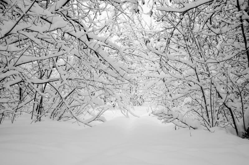 Κλάδοι των δέντρων κάτω από το βάρος του χιονιού στοκ εικόνες