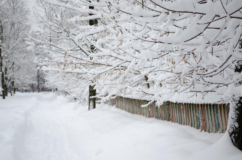 Κλάδοι των δέντρων στο χιόνι κατά μήκος του φράκτη στοκ φωτογραφία