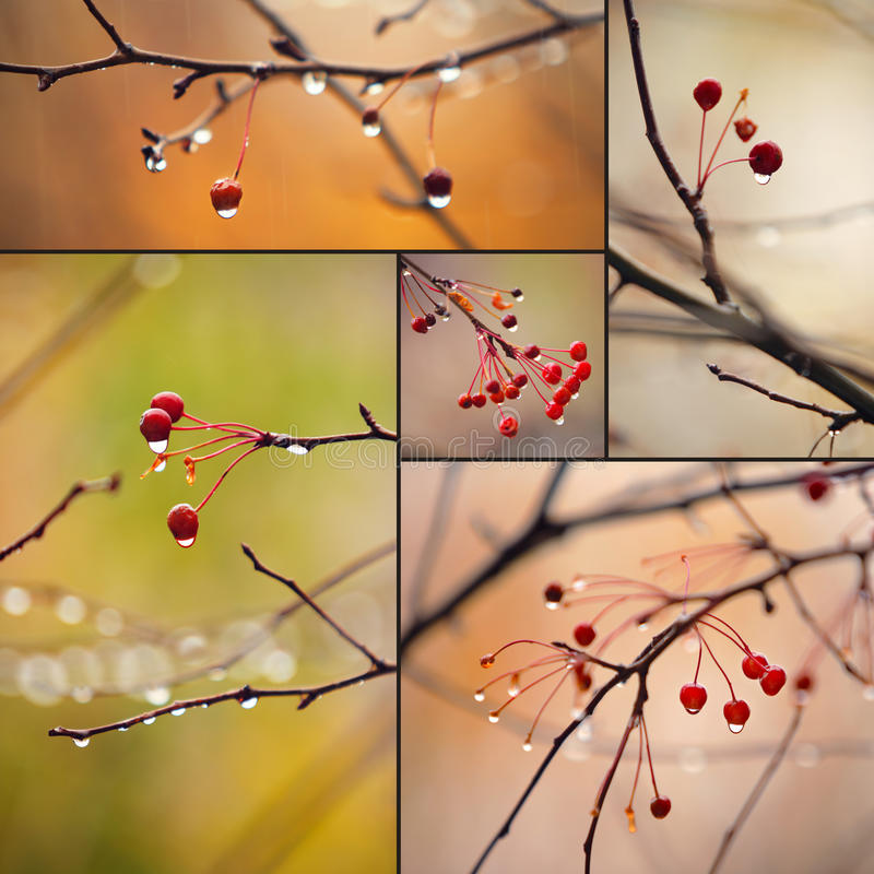 κλάδοι φθινοπώρου στοκ εικόνα με δικαίωμα ελεύθερης χρήσης