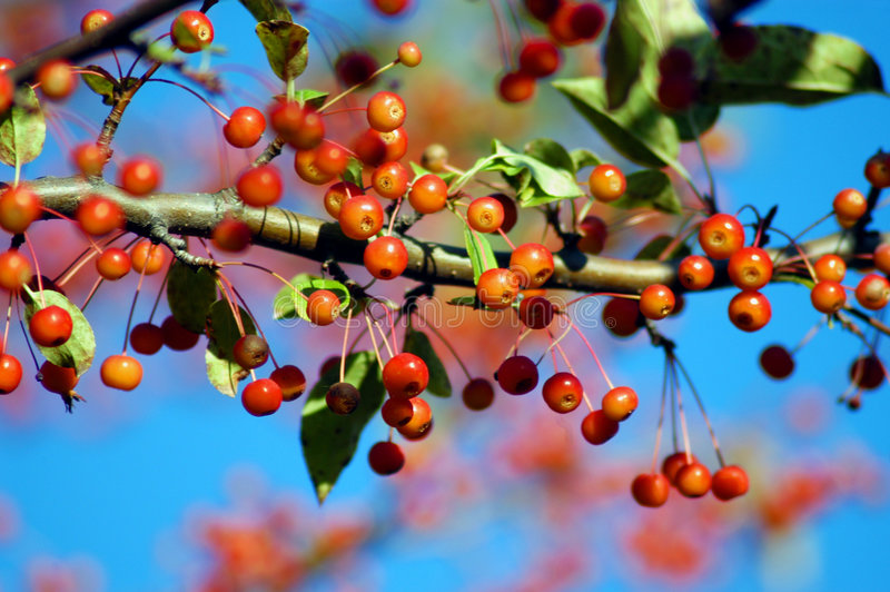 κλάδοι φθινοπώρου στοκ φωτογραφία