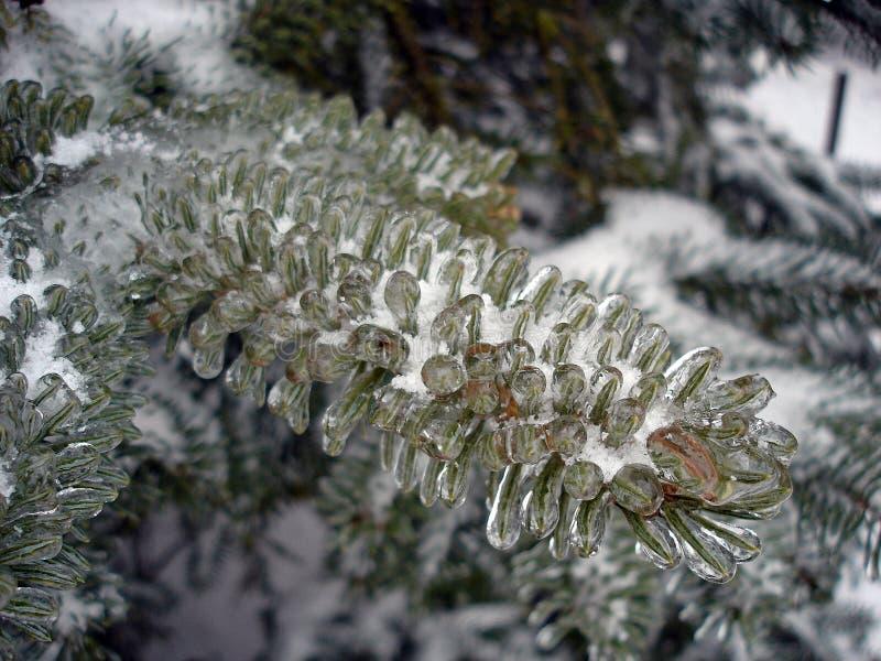 Κλάδοι χριστουγεννιάτικων δέντρων που καλύπτονται με τον πάγο στοκ φωτογραφία με δικαίωμα ελεύθερης χρήσης
