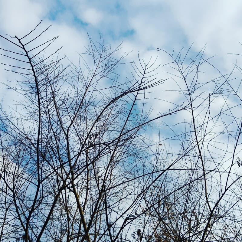 κλάδοι χωρίς πουλιά στοκ φωτογραφία με δικαίωμα ελεύθερης χρήσης
