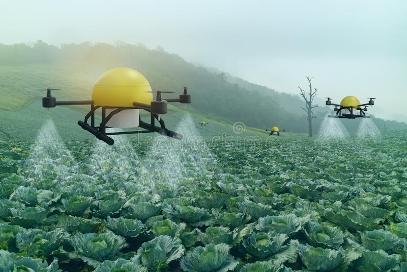Κλάδος έξυπνης γεωργίας 4 0 έννοια, drone σε εκμετάλλευση ακριβείας για ψεκασμό νερού, λιπάσματος ή χημικής ουσίας στο αγρόκτημα, στοκ εικόνες