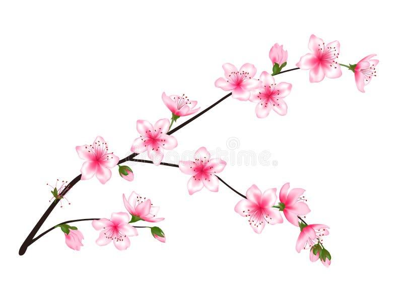 Κλάδος δέντρων άνθισης άνοιξη με τα ρόδινα λουλούδια διανυσματική απεικόνιση