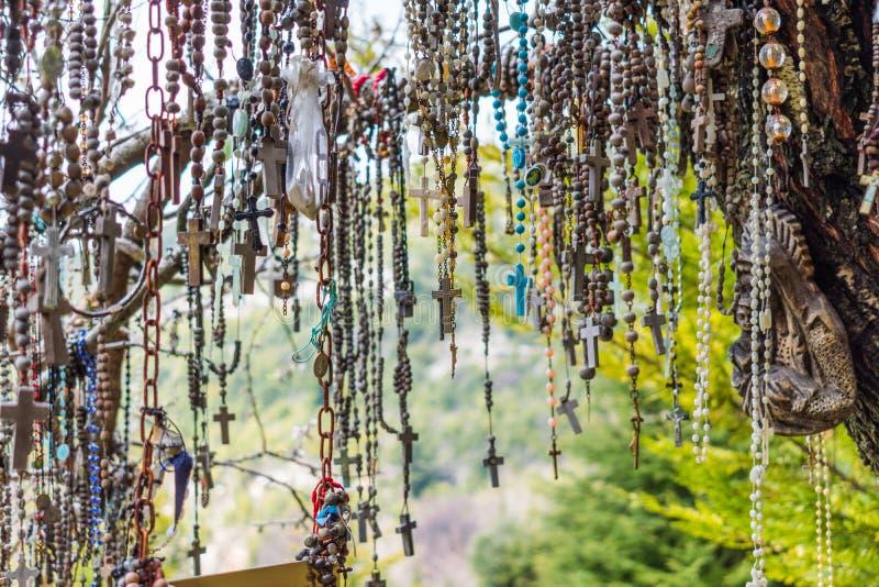 Κλάδος ενός συνόλου δέντρων rosaries στοκ εικόνα
