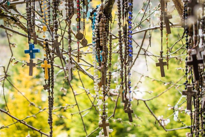 Κλάδος ενός συνόλου δέντρων rosaries στοκ φωτογραφία με δικαίωμα ελεύθερης χρήσης