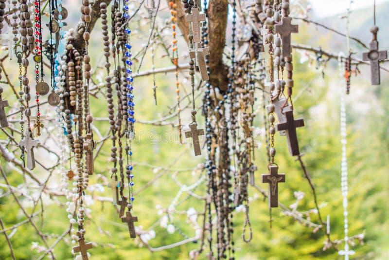 Κλάδος ενός συνόλου δέντρων rosaries στοκ φωτογραφίες