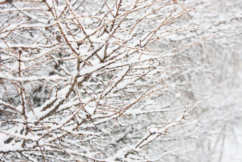 Κλάδος στο χιόνι στοκ εικόνες με δικαίωμα ελεύθερης χρήσης