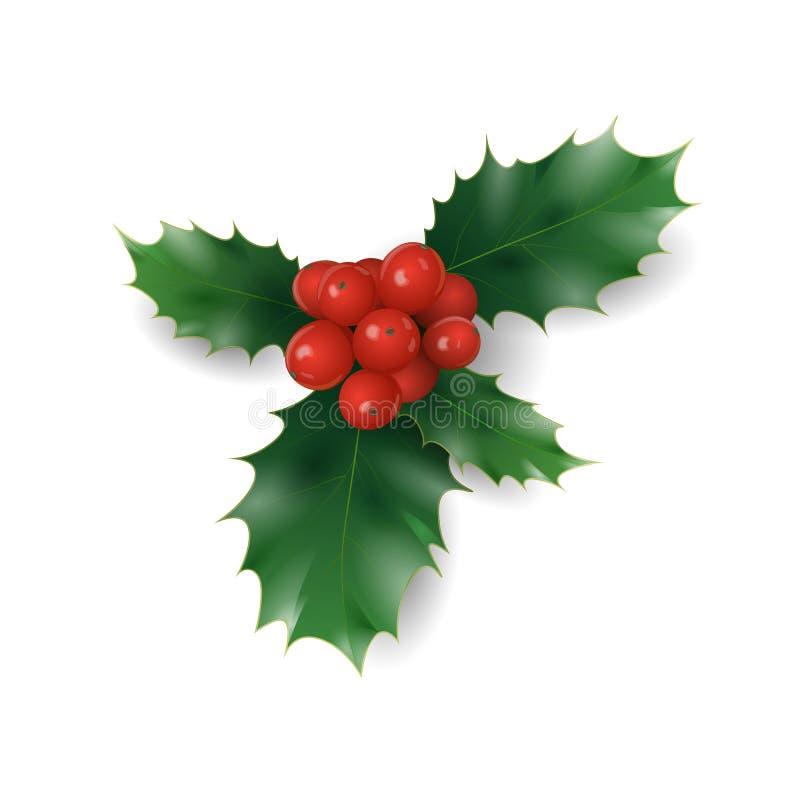 Κλάδος της Holly με το κόκκινο σύμβολο Χριστουγέννων μούρων Διακοπών παραδοσιακά πράσινα φύλλα μερών στεφανιών έτους διακοσμήσεων διανυσματική απεικόνιση
