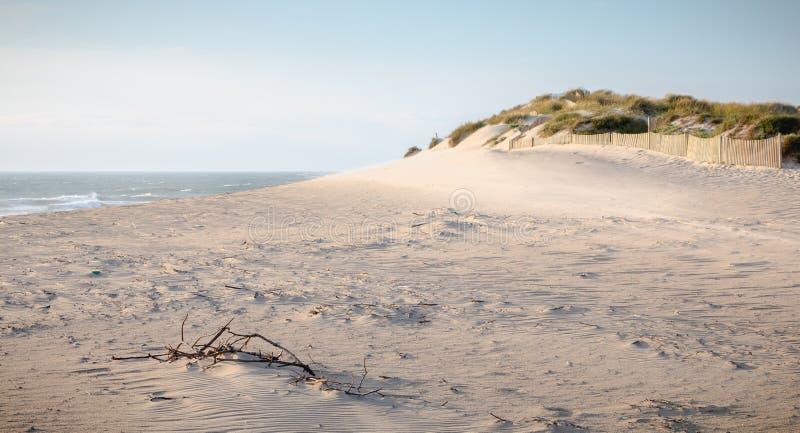 Κλάδος του ξύλου που τοποθετούνται στη λεπτή άμμο στοκ εικόνες με δικαίωμα ελεύθερης χρήσης