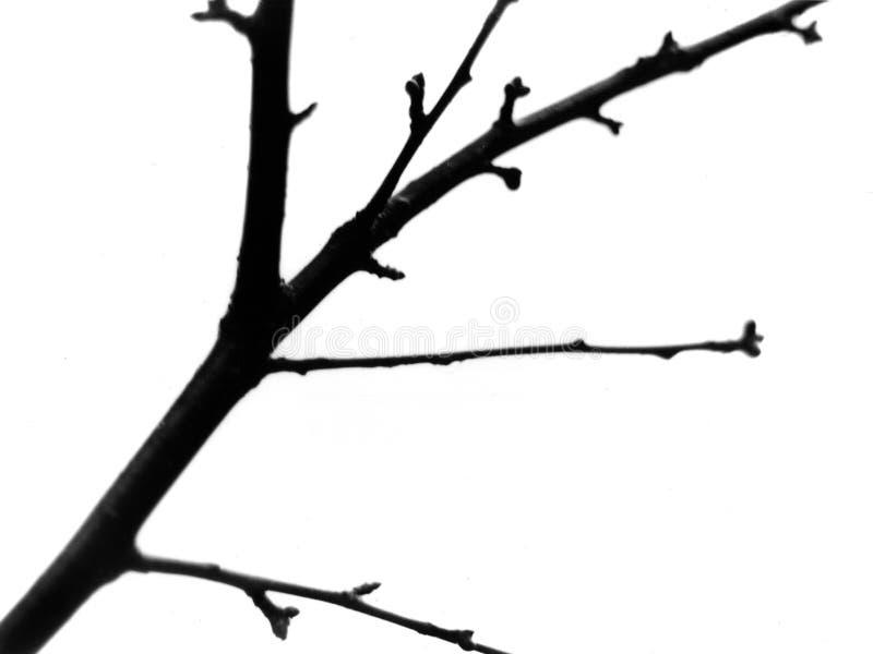 κλάδος Στοκ εικόνες με δικαίωμα ελεύθερης χρήσης