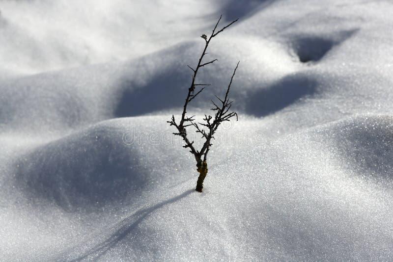 κλάδων ερήμων ξηρό δέντρο χι&omic στοκ φωτογραφίες με δικαίωμα ελεύθερης χρήσης