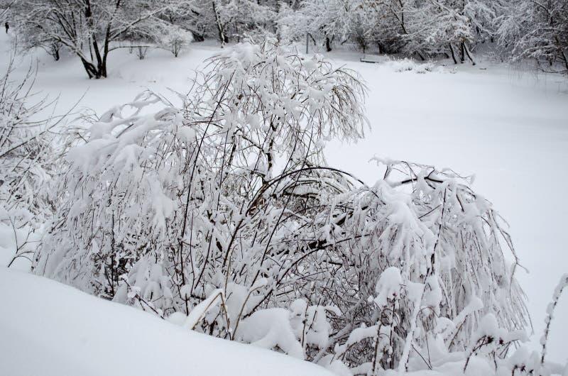 Κλάμα της ιτιάς κάτω από το βάρος του χιονιού στοκ φωτογραφία με δικαίωμα ελεύθερης χρήσης