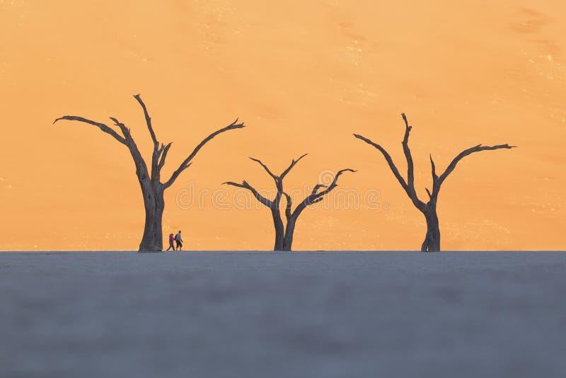 Κλίμακα δύο ανθρώπων ενάντια στα νεκρά δέντρα στοκ φωτογραφία