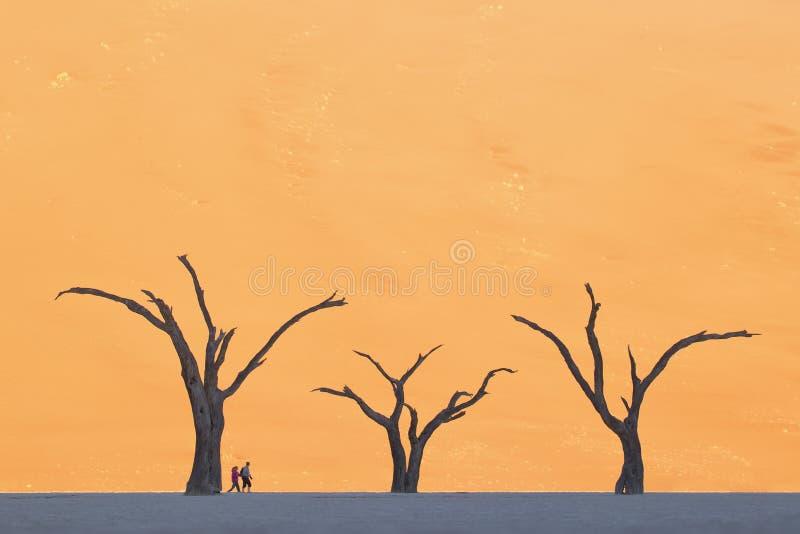 Κλίμακα δύο ανθρώπων ενάντια στα νεκρά δέντρα Ναμίμπια, Deadvlei, Sossusvlei στοκ εικόνα
