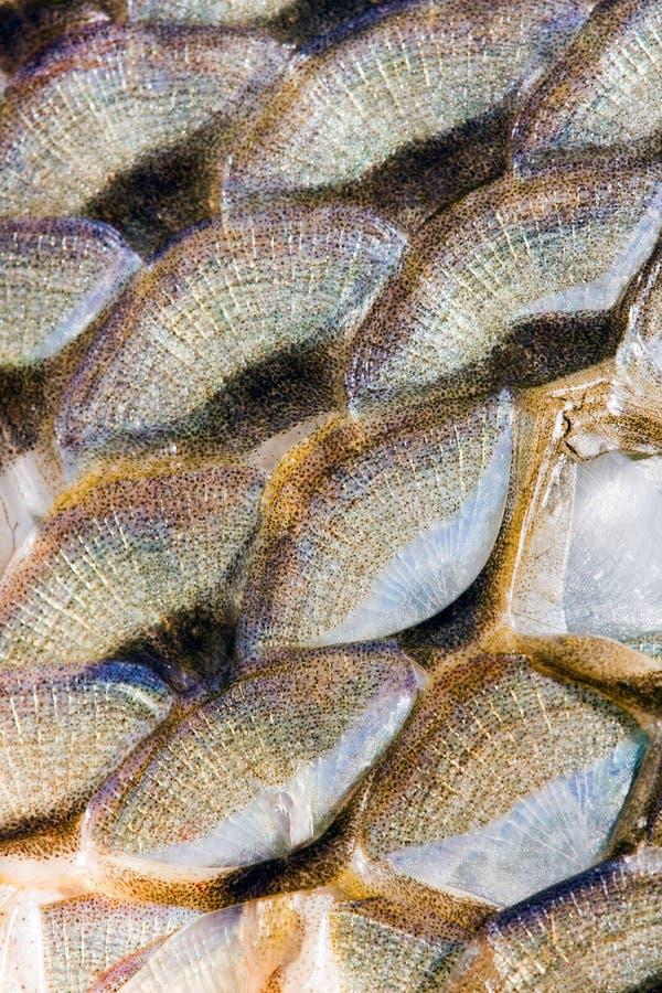 κλίμακες ψαριών ανασκόπησ στοκ φωτογραφίες