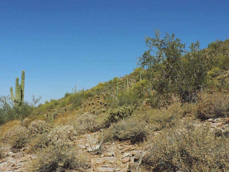Κλίση ερήμων στοκ φωτογραφίες με δικαίωμα ελεύθερης χρήσης