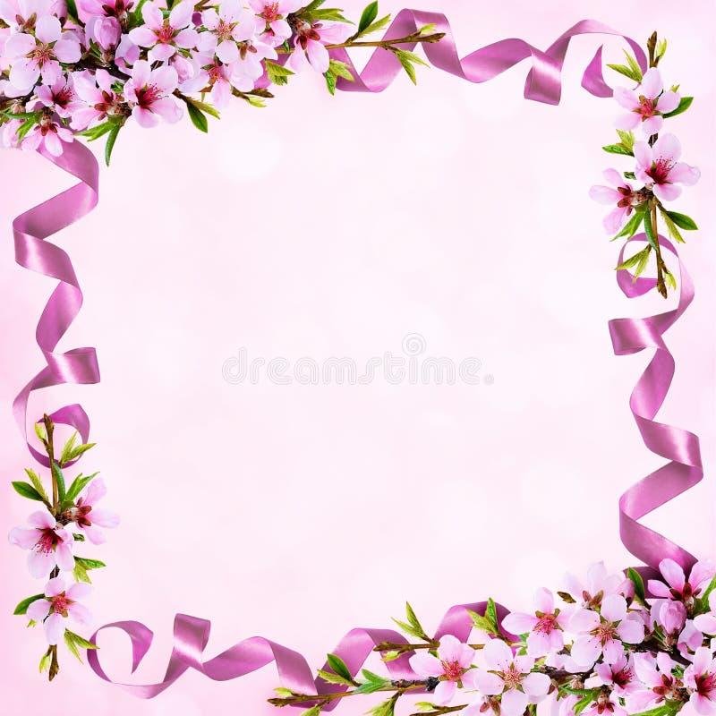 Κλαδίσκοι άνοιξη των λουλουδιών ροδάκινων και του πλαισίου κορδελλών μεταξιού ελεύθερη απεικόνιση δικαιώματος