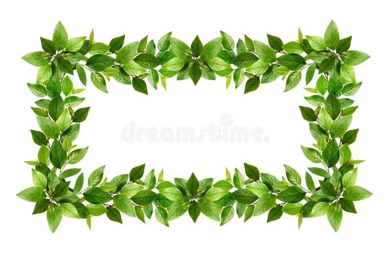 Κλαδίσκοι με τα φρέσκα πράσινα φύλλα σε ένα πλαίσιο απεικόνιση αποθεμάτων