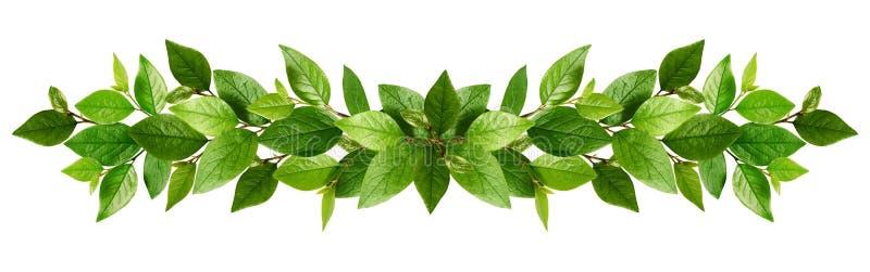Κλαδίσκοι με τα φρέσκα πράσινα φύλλα σε μια γιρλάντα στοκ εικόνες
