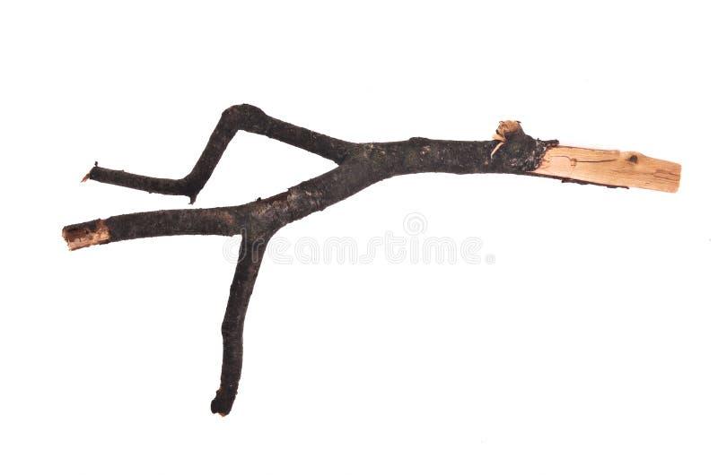 κλαδίσκος ραβδιών στοκ εικόνα με δικαίωμα ελεύθερης χρήσης