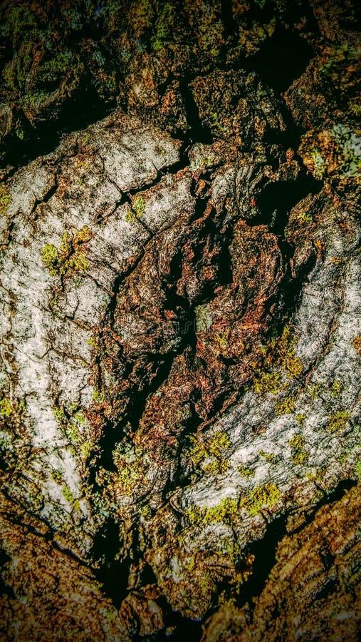 Κλαδί δέντρων περικοπών στοκ φωτογραφία με δικαίωμα ελεύθερης χρήσης