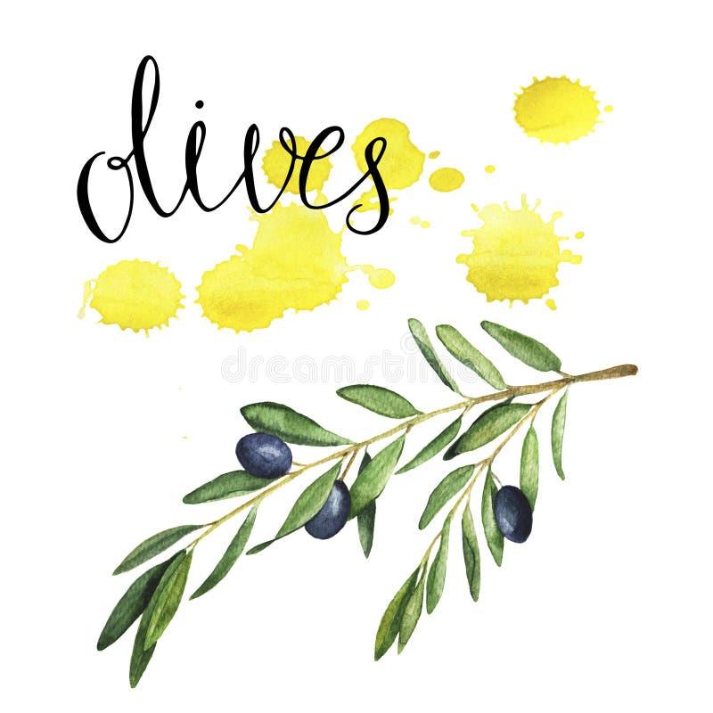 Κλαδί ελιάς στο άσπρο υπόβαθρο με τα κίτρινες σκηνικά και την εγγραφή χεριών Συρμένη χέρι απεικόνιση watercolor ελεύθερη απεικόνιση δικαιώματος