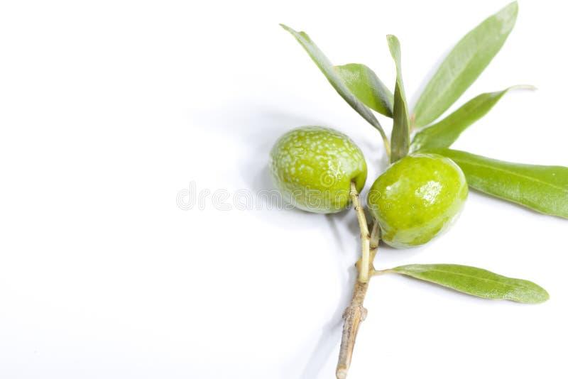 Κλαδί ελιάς στοκ φωτογραφία