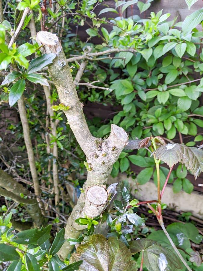 Κλαδιά με κλαδιά στοκ φωτογραφία με δικαίωμα ελεύθερης χρήσης