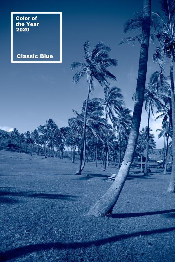 Κλασικό μπλε φόντο Φοίνικας στο Πάσχα Χρώμα του έτους Coy2020 στοκ φωτογραφίες με δικαίωμα ελεύθερης χρήσης