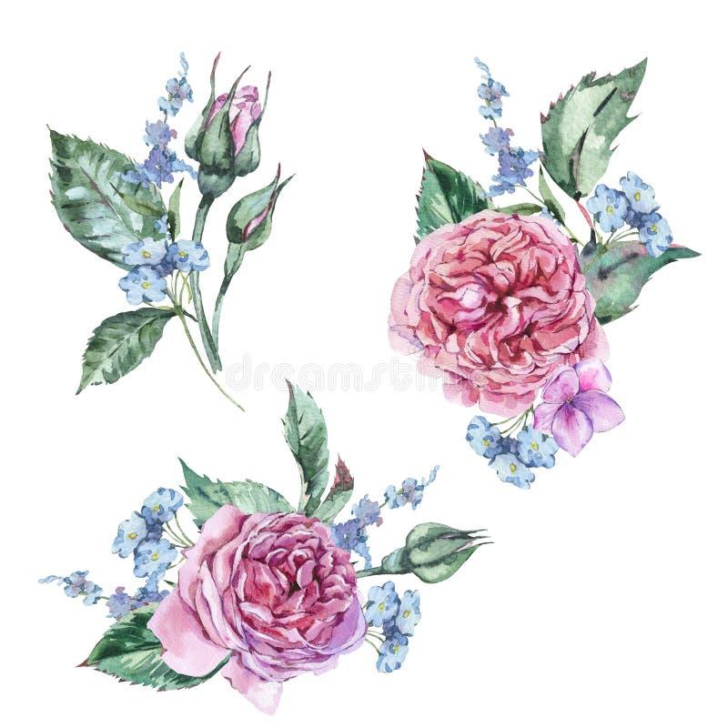 Κλασσικό σύνολο Watercolor εκλεκτής ποιότητας Floral στοιχείων, Watercolor απεικόνιση αποθεμάτων