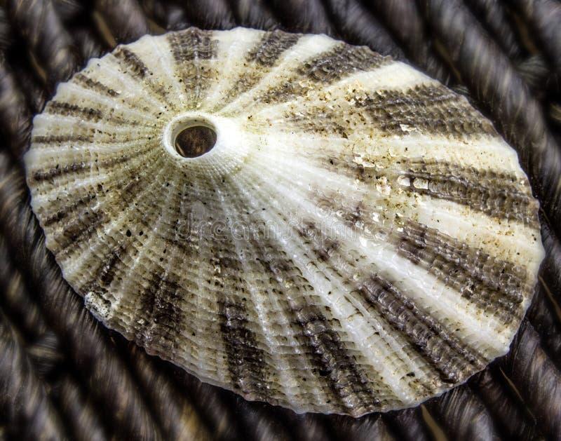 Κλείσιμο ενός Limpet Seashell στοκ εικόνα με δικαίωμα ελεύθερης χρήσης