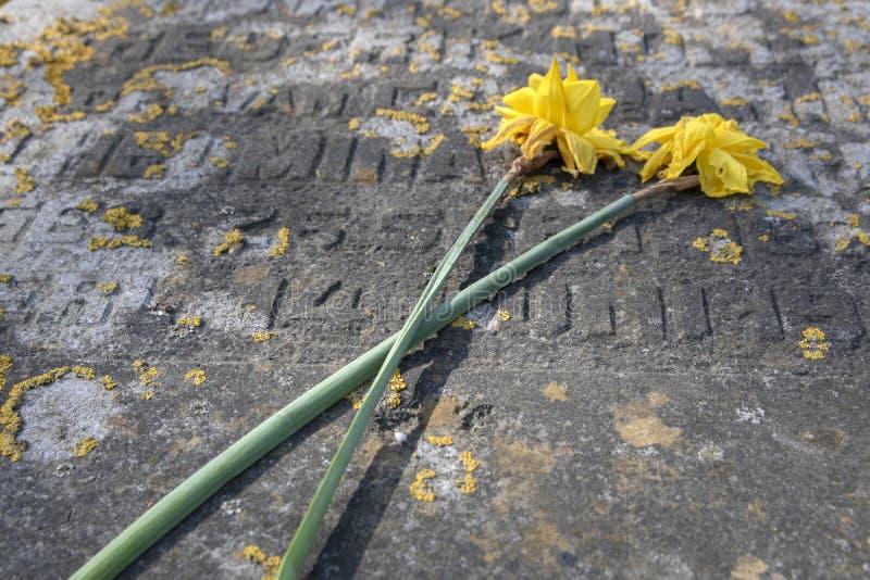 Κλείσιμο Νεκρών Λουλουδιών Σε Έναν Τάφο Στο Νεκροταφείο Nieuwe Ooster Στο Άμστερνταμ Των Κάτω Χωρών 2020 στοκ εικόνες