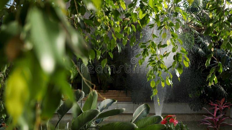 Κλείστε επάνω για τα όμορφα πράσινα φύλλα ενός δέντρου με μια μηχανή ποτίζοντας τα φυτά στο υπόβαθρο, έννοια κηπουρικής στοκ φωτογραφίες με δικαίωμα ελεύθερης χρήσης