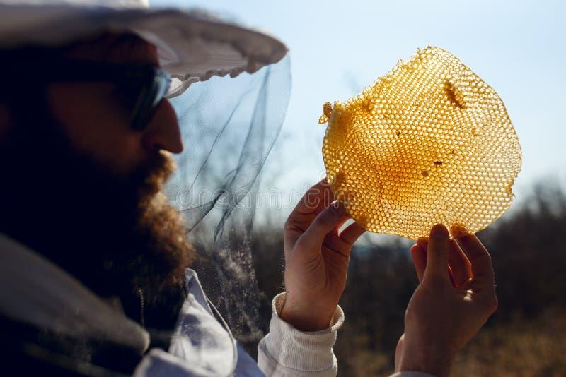 Κλείστε επάνω ενός μελισσοκόμου που κρατά υπό εξέταση ένα τεμάχιο στην κενή νέα κηρήθρα Υγιή φυσικά τρόφιμα στοκ φωτογραφίες