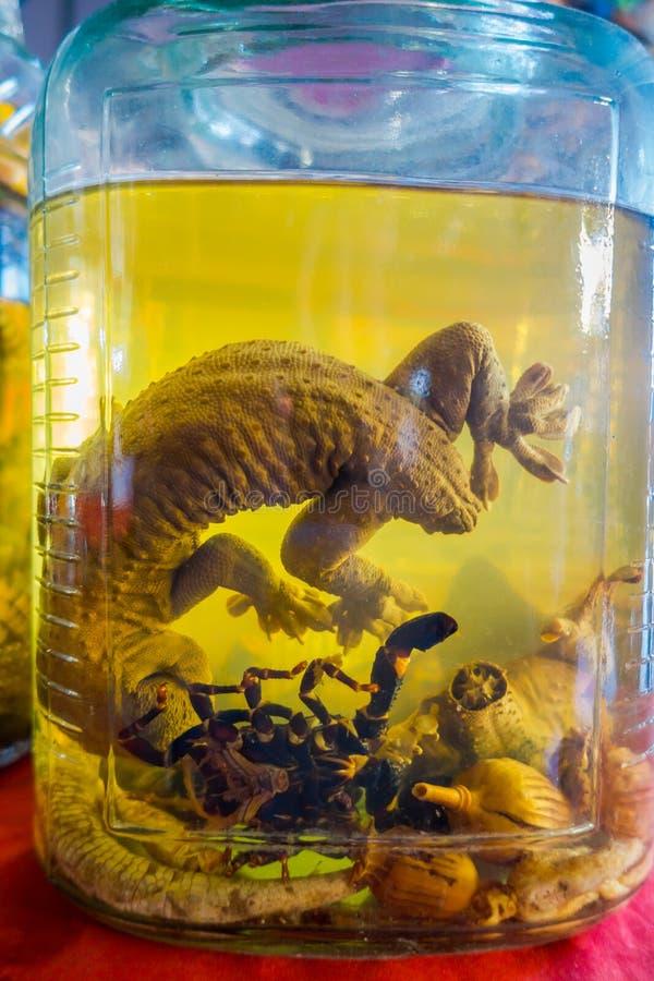 Κλείστε επάνω ενός gecko μέσα της φιάλης ουίσκυ, που προετοιμάζεται από τους ντόπιους σε ένα νησί από την ακτή του Λάος, στο χρυσ στοκ εικόνες