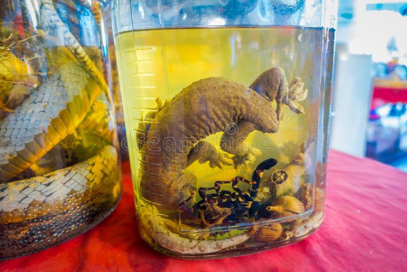 Κλείστε επάνω ενός gecko μέσα της φιάλης ουίσκυ, που προετοιμάζεται από τους ντόπιους σε ένα νησί από την ακτή του Λάος, στο χρυσ στοκ εικόνα με δικαίωμα ελεύθερης χρήσης