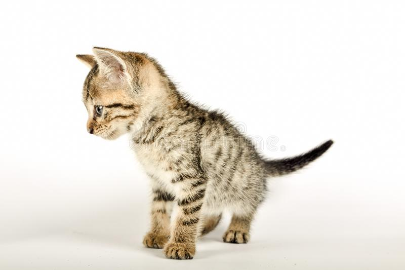 Κλείστε επάνω ενός kittie στοκ φωτογραφία με δικαίωμα ελεύθερης χρήσης